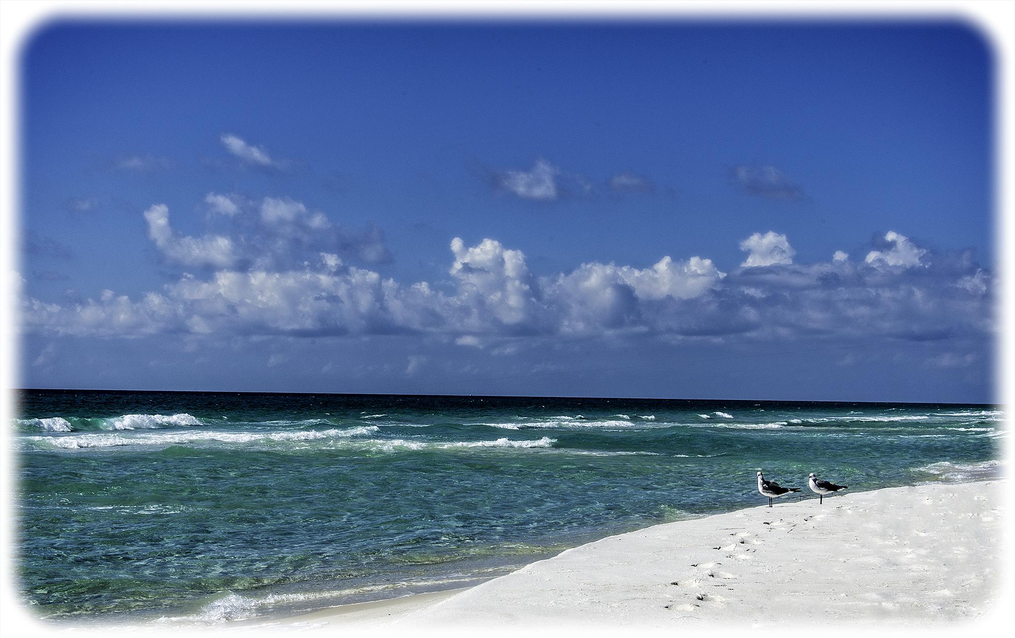 Pensacola Seagulls
